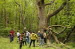 Participants in last year's 'Where the Wild Things Are' foraging walks (photo Angela Cardinali)