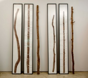 Allan Wexler, Reframing Nature, 2015, archival digital prints, tree branch and wood frames