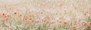 Wildflowers by Martin Greene