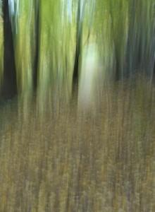 Path by John Clarke